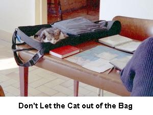 Catbagcaptioned_4